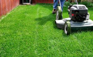 Lawn Care SW19